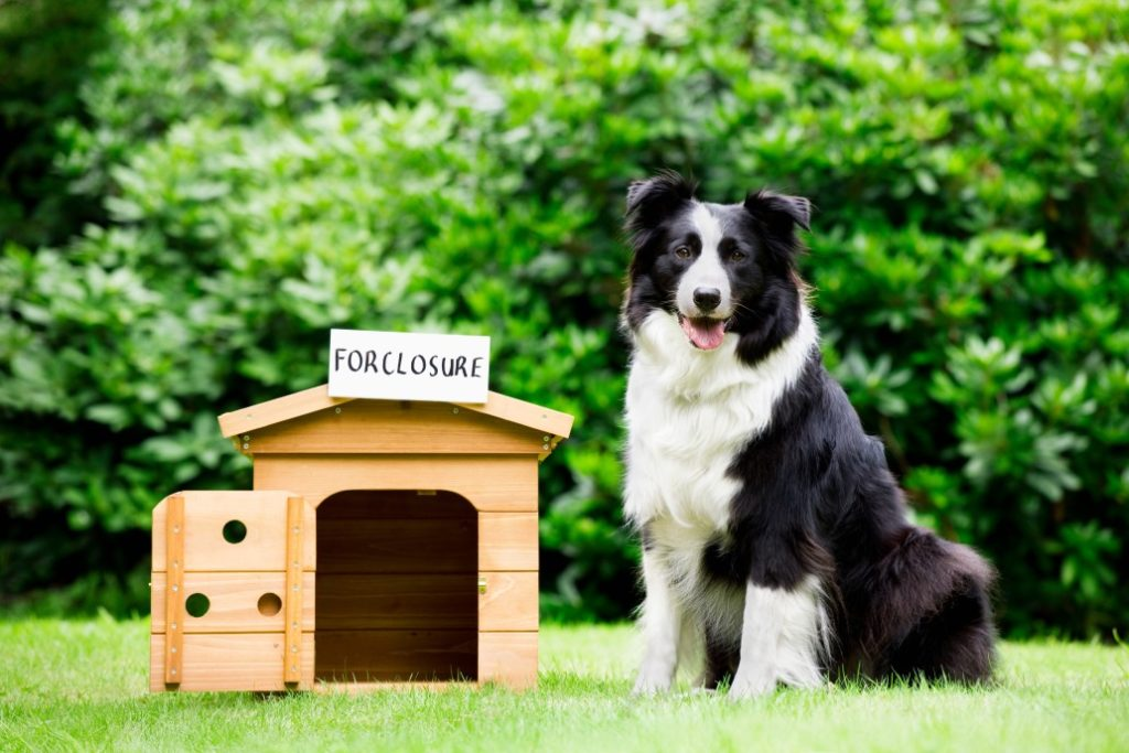 foreclosure dog house